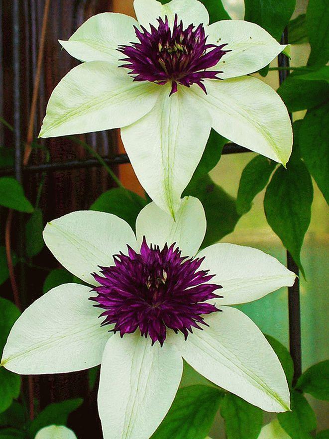 Расцветки и формы лиан