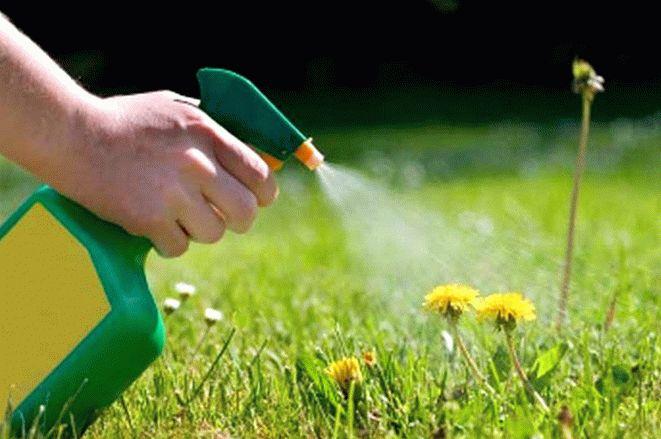 гербициды в борьбе с амброзией