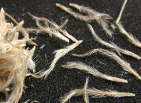semena-son-travy-e1459078111942