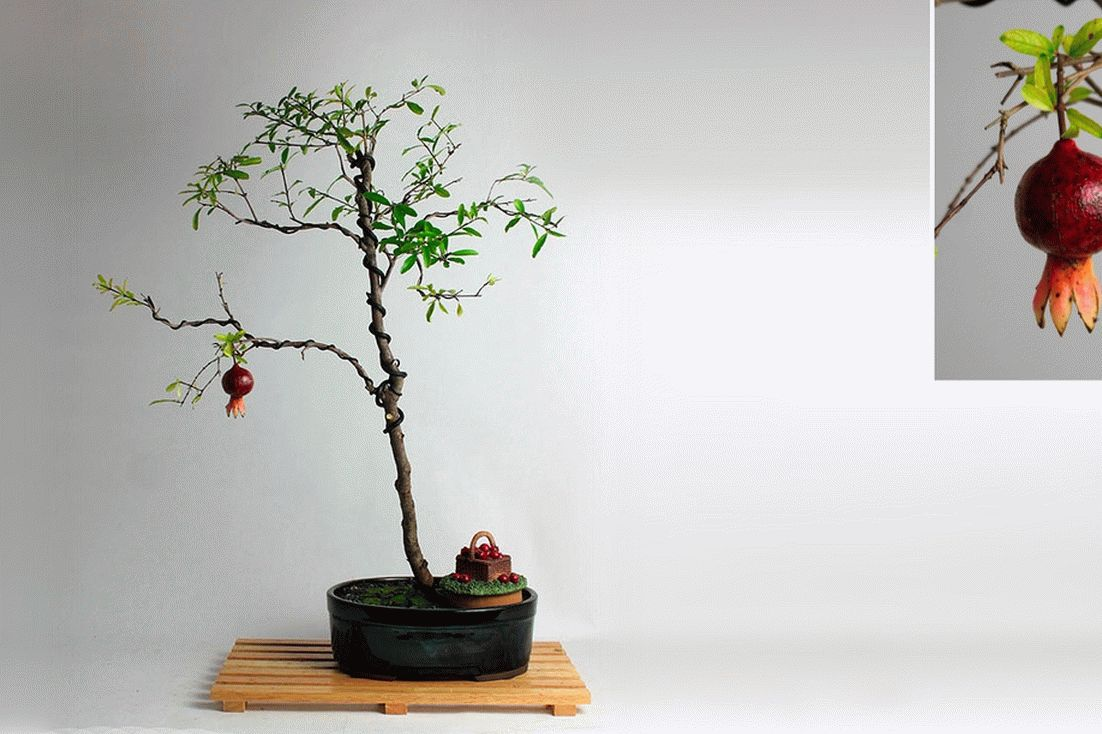 товар недели дерево бонсай3