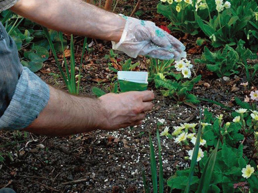 Удобрение цветов в саду