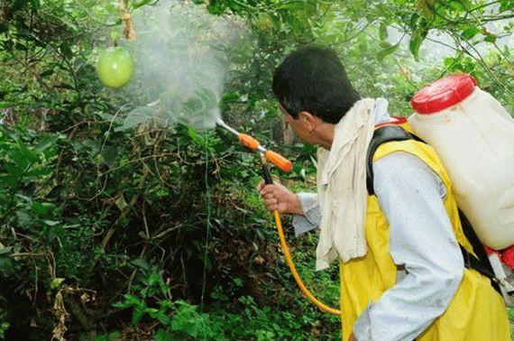 Опрыскивание сада для удаления вредителей