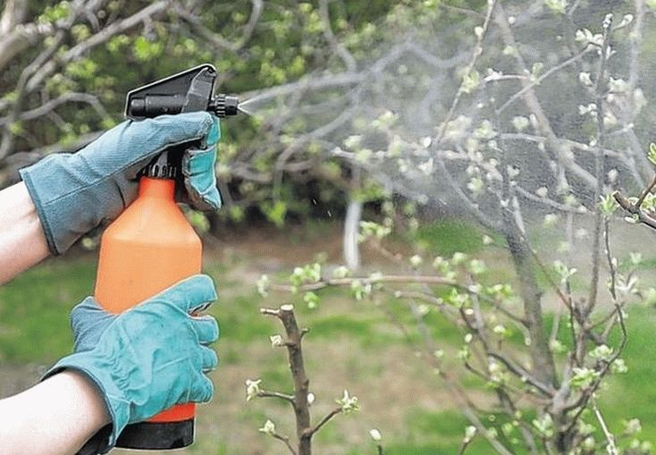 Опрыскивание растений после в период цветения
